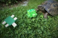 Schildkröten (5a)